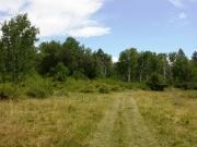 grassy_trail