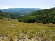 meadow_in_bear_basin