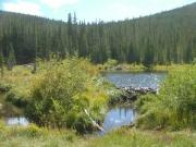 beaver_pond_part_1
