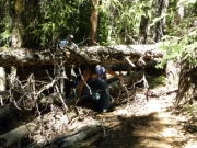 ducking_under_a_tree