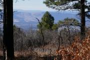 view_through_trees