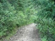 close_trees