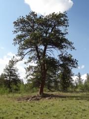 standalone_tree