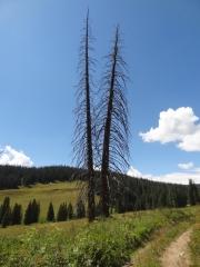 random_trees