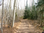 through_aspens