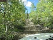 aspens_along_the_trail