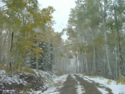 aspens_over_the_trail