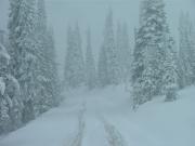 snow_through_the_trees