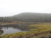 beaver_ponds