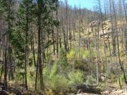 burned_trees