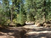 live_pine_trees