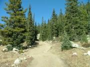 through_pine_trees
