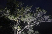 night_tree