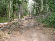 dead_tree_in_the_trail