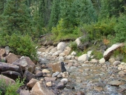 in_the_stream_part_4
