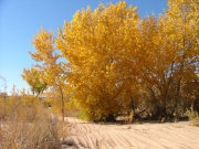 cottonwoods_part_2