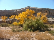 cottonwoods_part_3
