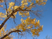 cottonwoods_part_5