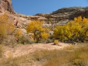 cottonwoods_part_7