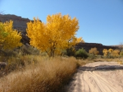 cottonwoods_part_8