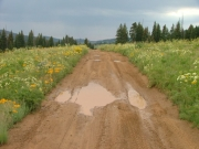 trail_through_puddles
