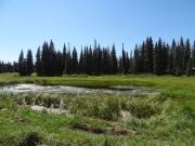 marshy