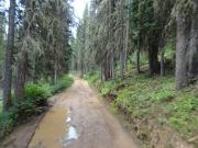 mud_puddles