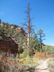 hiking_trail_part_2
