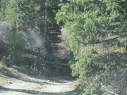 fallen_trees