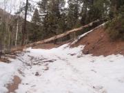 tree_down