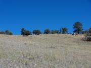 grassy_hill