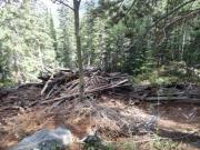 timber_part_1