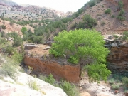 rough_canyon_falls_part_6
