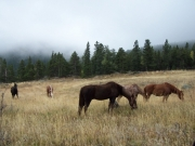 hungry_horses