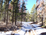 snow_on_the_trail_part_4