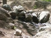rock_garden_part_4