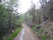 soggy_trail