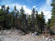 short_trees