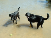happy_dogs