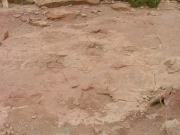 dinosaur_tracks_part_1