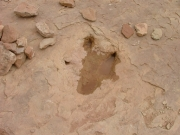 dinosaur_tracks_part_4