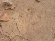 dinosaur_tracks_part_7