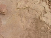 dinosaur_tracks_part_9