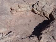 dinosaur_track_1