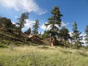 rocks_and_trees