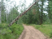 falling_tree