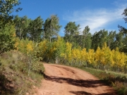 layers_of_aspens