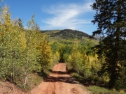 ruts_in_aspens