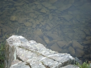 fish_in_lower_mohawk_lake