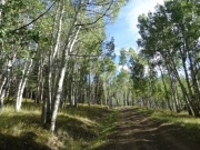between_aspens